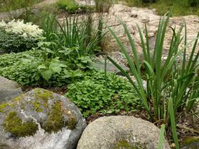 Kivet ja kasvit rinta rinnan