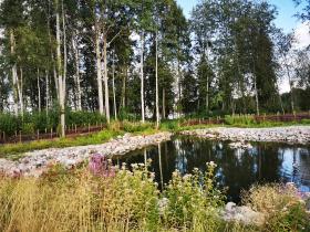 Hiekanpään rantapuiston hulevesiallas, taustalla lahopuuaita rajaamassa luonnontilaista aluetta rakennetusta.