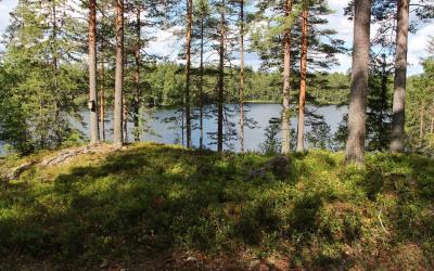 Metsän siimeksessä. Kuva Anu Valkeinen