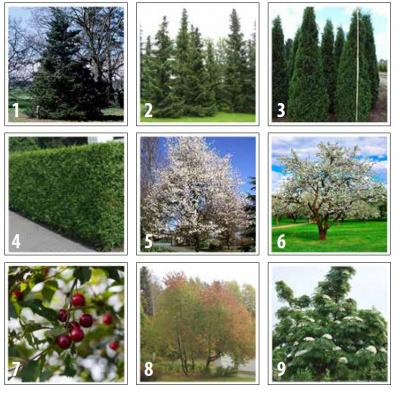 Puutarhaetsivien suosikkipuut kuvina