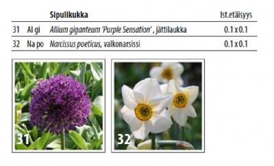 Puutarhaetsivien suosikki kukkasipulit